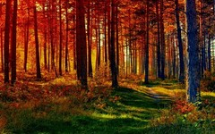 forest-path-hd-wallpapers-8.jpeg